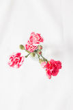 Fleur rouge d'oeillet Photo stock