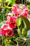 Fleur rouge d'orchidée Image stock