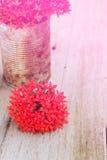 Fleur rouge dans en boîte Photos stock