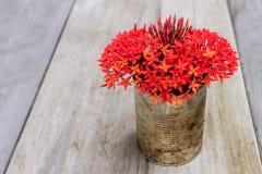 Fleur rouge dans en boîte, vintage d'amour Photos stock