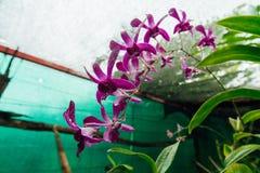 Fleur rouge dans une jungle humide pendant la saison des pluies photos libres de droits