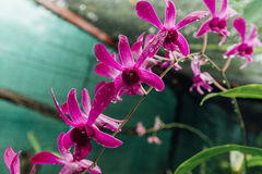 Fleur rouge dans une jungle humide pendant la saison des pluies image libre de droits