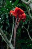 Fleur rouge dans une jungle humide pendant la saison des pluies images stock