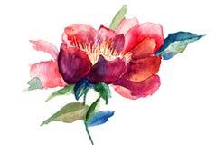 Fleur rouge décorative Photographie stock libre de droits