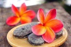 Fleur rouge de frangipani avec des pierres photo stock