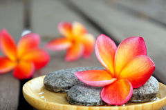 Fleur rouge de frangipani avec des pierres images stock