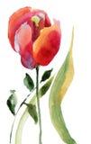 Fleur rouge de tulipe Photo stock