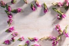 Fleur rouge de vue sur le bois Photographie stock libre de droits