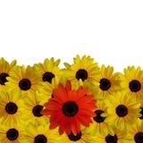 Fleur rouge en jaune Photos libres de droits