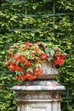 Fleur rouge en pierre sur une armoire Photographie stock