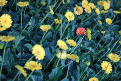 Fleur rouge et fleur jaune Photos stock