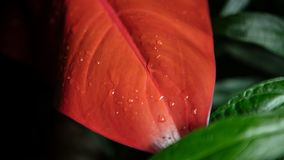 Fleur rouge et verte comme d'habitude photos libres de droits