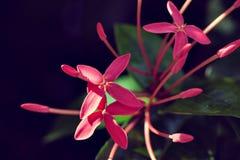 Fleur Rouge Exotique Photo Stock Image Du Fleur Decoration 113680824