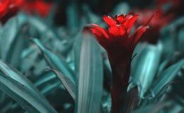 Fleur rouge exotique photographie stock libre de droits