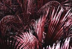 Fleur rouge exotique photos stock