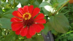 Fleur rouge lumineuse avec le milieu convexe avec de petites fleurs là-dessus images stock