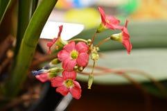 Fleur rouge spéciale photo stock