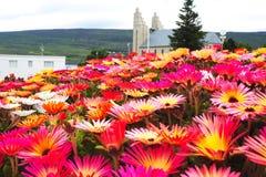 Fleur rouge sur l'Islande. Image libre de droits