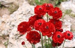 Fleur rouge sur la pierre Images libres de droits