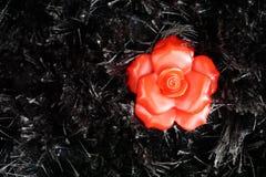 Fleur rouge sur le fond noir Photos stock