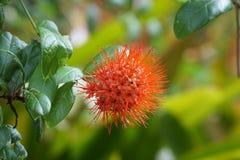 Fleur rouge sur le fond vert images stock