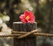Fleur rouge sur le poteau avec la corde image libre de droits