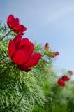 Fleur rouge sur le vert Photos stock