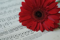 Fleur rouge sur les notes musicales Photo libre de droits