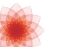 Fleur rouge sur un fond gris Photo stock