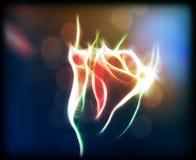 Fleur rougeoyante de Rose Image stock
