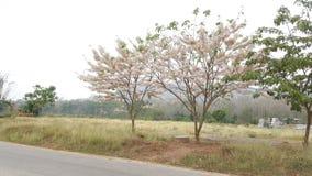 Fleur rurale Images libres de droits