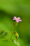 Fleur rurale rose vive image libre de droits