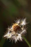 fleur sèche photo libre de droits