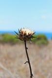 Fleur sèche Image libre de droits