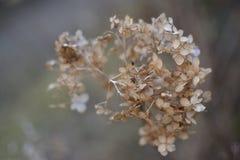 Fleur sèche Image stock