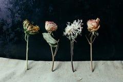 Fleur sèche au-dessus de vieux fond noir en métal Photographie stock