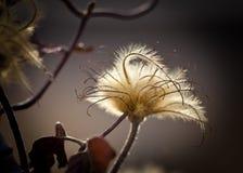 Fleur sèche en nature Images libres de droits