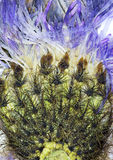 Fleur sèche par résumé photographie stock