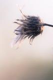Fleur sèche rustique Photo libre de droits