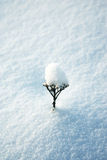 Fleur sèche sur la neige Images stock