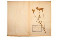 Fleur sèche sur le vieux, allé papier jaune photographie stock