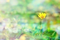 Fleur s'élevante de wedelia dans le style de vintage image libre de droits