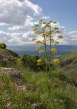 Fleur salutaire Photographie stock libre de droits