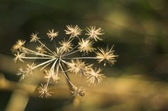 Fleur sapless de photo Photo libre de droits