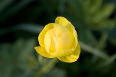 Fleur sauvage Photos stock
