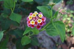 Fleur sauvage Images libres de droits