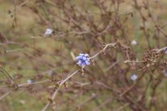 Fleur sauvage Images stock