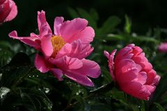 Fleur sauvage Photo libre de droits