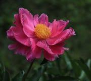 Fleur sauvage Photo stock