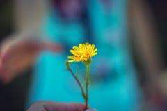 Fleur sauvage avec amour romance, Photographie stock